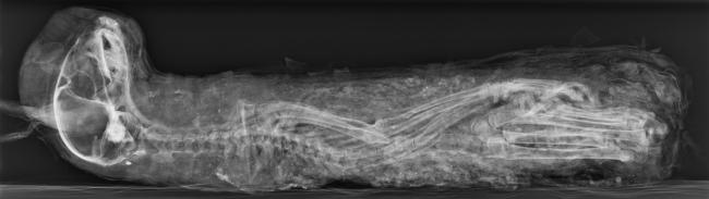 gatto_radiografia